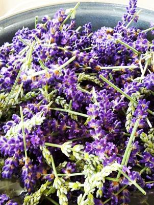Lavendelus